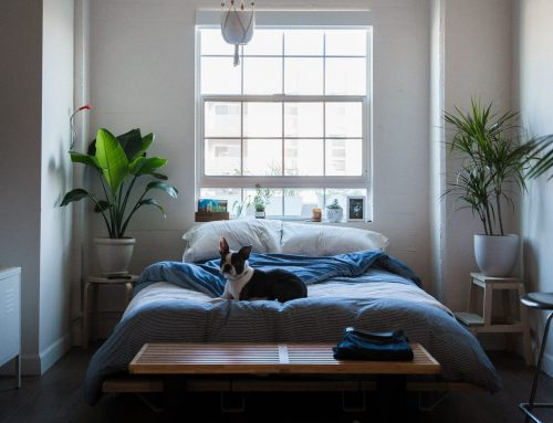 Plants for better sleep: add greenery to your bedroom